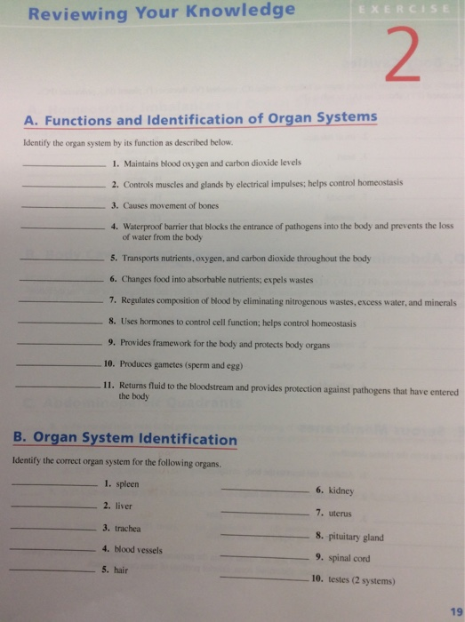 human anatomy and physiology lab manual exercise 2 answers